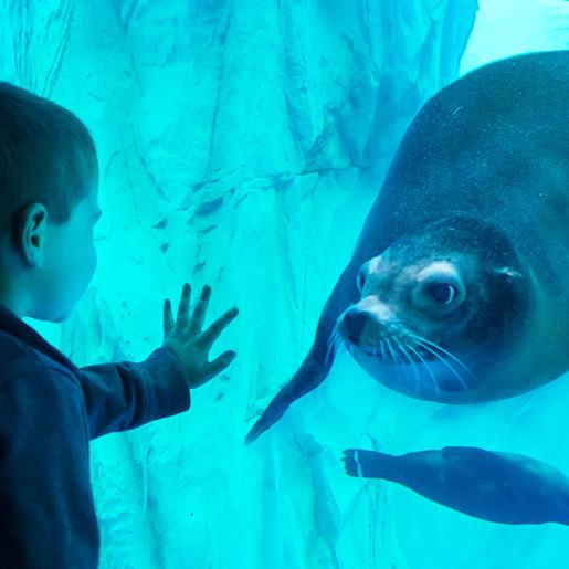 4 ingressi per SEA LIFE Aquarium